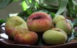 Uma semente de pêssego diferente e que se adapta bem a regiões menos frias
