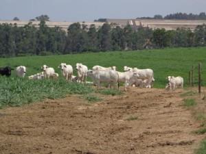 desmatamento e efeito estufa