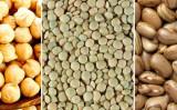 Leguminosas de grãos terão investimentos de 100 milhões para pesquisas no Brasil