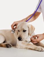 Dia do veterinário é comemorado em várias partes do Brasil