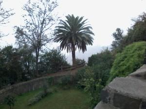 palmeira-no-chile