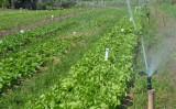 A agroecologia está crescendo nos estados brasileiros