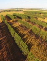 Cresce na agropecuária brasileira a adoção do sistema Lavoura-pecuária-floresta