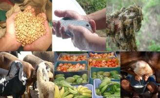 Aumenta a quantidade de culturas na cobertura do Seguro da Agricultura Familiar