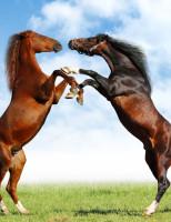 Veterinária orienta como reduzir o estresse em cavalos