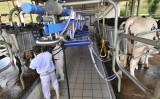 Produção de leite no Brasil deve apresentar  queda no fechamento do balanço de 2016