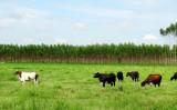 Balanço final do Valor da Produção da agricultura registra uma queda em 2016