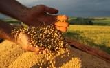 Zoneamento agrícola vai orientar o plantio para a Safra 2017/2018