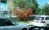 Uma árvore só de flores