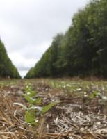 Integração lavoura pecuária pode armazenar mais carbono e recuperar o solo