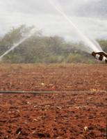Projetos irrigados de Pernambuco ganham investimentos para aumentar a competitividade