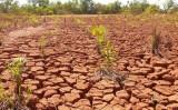 A degradação das terras produtivas brasileiras tem histórico antigo