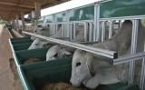Melhor eficiência alimentar de bovinos está em testes com cochos eletrônicos