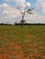 Manejo correto do solo evita perdas da qualidade e melhoria na produção da pecuária