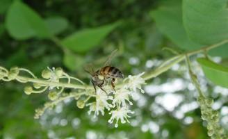 Um mapa vai mostrar a hora da florada para implantação do apiário