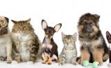 Será no mês que vem o maior encontro sobre animais de estimação da América Latina