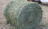 Um jeito de garantir alimento para os animais nos períodos de seca