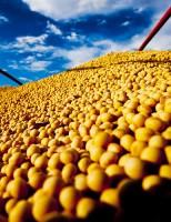 Como reduzir perdas e elevar qualidade da soja brasileira