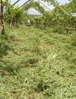 As vantagens do uso da adubação verde nos plantios