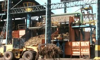 Safra de cana de açúcar em Pernambuco fica mais valorizada este ano