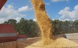 O impressionante crescimento da produção de soja no Brasil