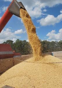 colheita da soja 2 - jorrando no caminhão