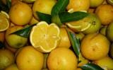 Queda na safra de laranja brasileira reduz as exportações