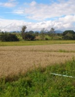 Clima provoca vantagens e prejuízos para várias culturas no Brasil na safra deste ano