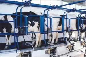 leite produção