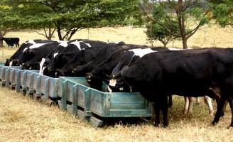 Alimentação correta associada a uma boa vitamina faz a produção de leite aumentar