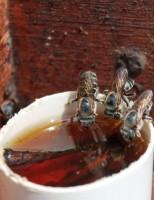 Especialistas se reúnem no Piauí para discutir maneiras de evitar as perdas de abelhas