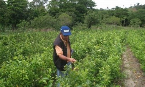 Pernambuco fica livre de praga que ataca a citricultura