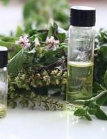Extratos de plantas são usados como defensivos agrícolas