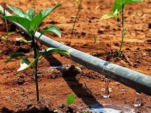Irrigação em Gotas