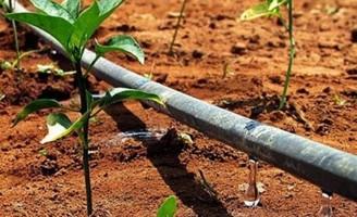 Kits de irrigação usam tecnologia israelense para economizar água e aumentar a produtividade