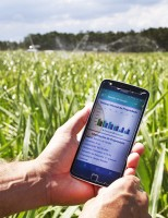 Um aplicativo de celular ajuda ao produtor controlar a oferta de alimento ao gado o ano todo