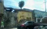 Uma árvore no telhado