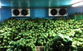 Revestimento especial favorece a exportação de coco verde do Brasil para a Europa