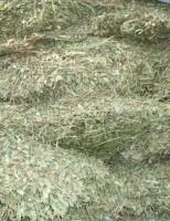 Enfrentando a seca para alimentar caprinos e ovinos no sertão nordestino