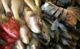 Começa a fiscalização para venda do pescado na Semana Santa