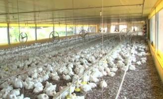Ministro tranquiliza consumidores sobre risco de contaminação de aves