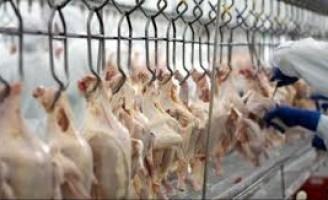 Exportações de aves brasileiras através da BRF ficam suspensas para a União Europeia