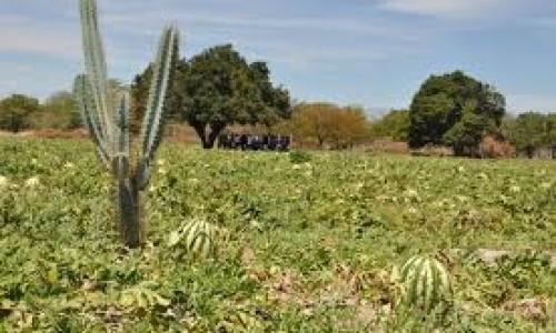 """<h2><a href=""""http://nordesterural.com.br/plantio-de-melancia-como-alternativa-de-boa-renda-para-o-produtor-rural/"""">Plantio de melancia como alternativa de boa renda para o produtor rural</a></h2>A melancia é uma planta rasteira que se desenvolve bem em solos de textura média, profundos e bem drenados, com boa retenção de umidade. O produtor ficar atento á competição"""