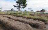 Orientações para aproveitar resíduos na produção de gado de corte e leite