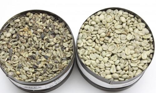 """<h2><a href=""""http://nordesterural.com.br/hoje-dia-nacional-do-cafe-voce-vai-conhecer-o-cafe-especial-e-o-cafe-tradicional/"""">Hoje Dia Nacional do Café você vai conhecer o café especial e o café tradicional</a></h2>O Brasil é o segundo maior consumidor de café no mundo e, em 2016, foram produzidas mais de 50 milhões de sacas, de acordo com os dados da ABIC (Associação"""