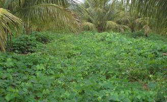 O produtor rural precisa saber quais são as plantas que enriquecem o solo