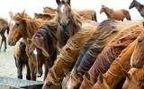 Nutrição correta e vacinação ajudam a melhorar o desempenho dos cavalos de trabalho