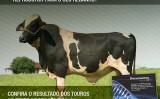 Uma atualização do sumários de touros girolando para aproveitamento do produtor
