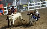 ABQM apresenta regras em vaquejadas que garantem o bem estar dos animais