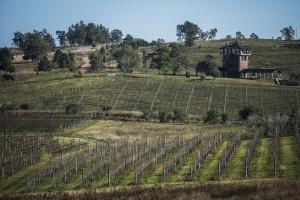 vinícola uruguaia 1